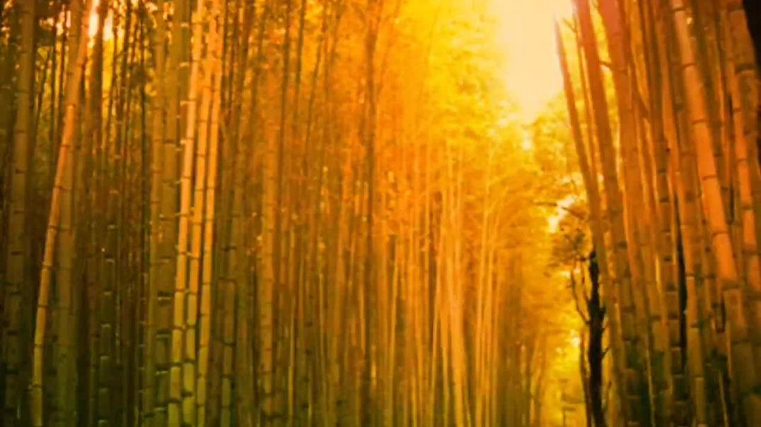 "2020 HEATWave Motivation  5 ""The Bamboo Tree"""